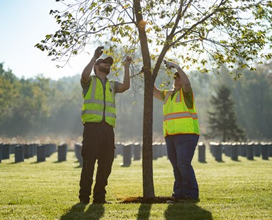 Top Reasons to Hire the Tree Care Professionals
